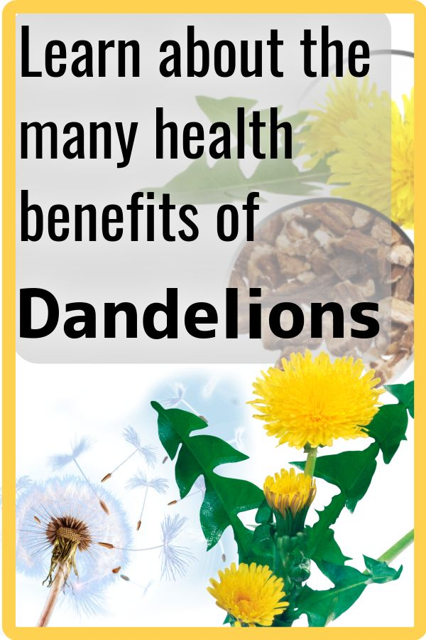 Dandelion Flowers Plant Strong Natural Herbs Healthy Plants