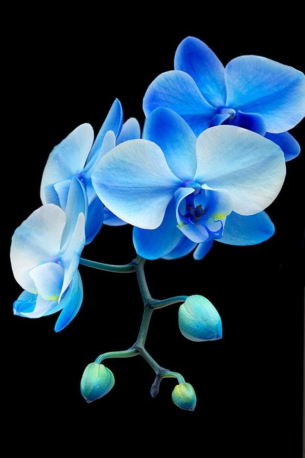 Blue orchids~ Flowers can feel your energy- one time i cried heavily for hours when my dog died~ the orchid in my living room slowly lost its petals one by one during the hours I was crying until the stem was bare~ Also, on the flip side flowers can liven your home up with their positive energy!  Flowers are alive