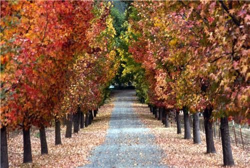 Tips for Landscaping a Driveway;     Four considerations for selecting landscape plants for near a driveway