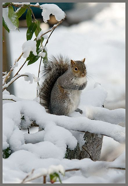 Snow is a rare occurence in downtown Victoria. Probably a first for this squirrel.