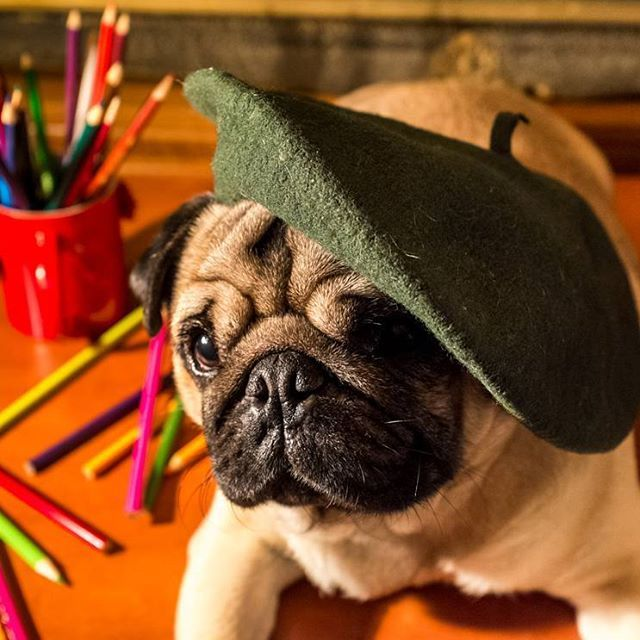 I dream my drawing and then I draw my dream   #mauricethepug #drawing #coloring #artistic #artisticside #creativeside #creative #VincentVanGogh #dream #aristicphoto #artisticpug #art #crayons #pug #mops #dog #puppy