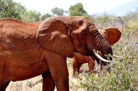 Sierociniec dla słoni.