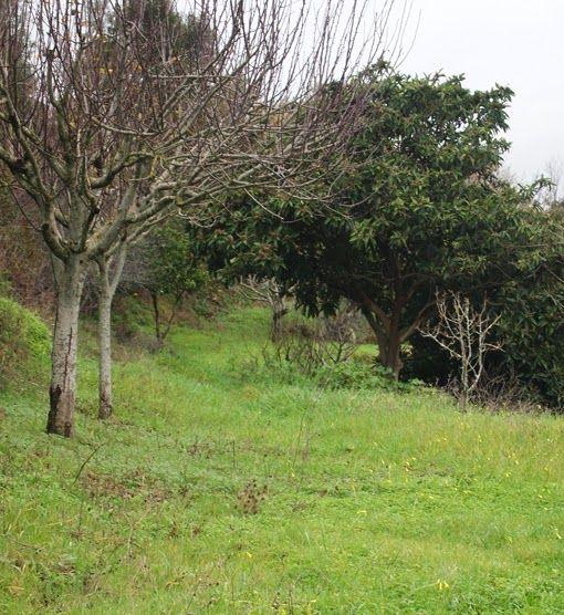 quinta sinfonia - portugal