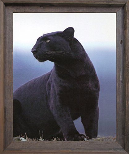 This wonderful Black Panther wild animal poster will surely add a hint of understated elegance to your home decor. This Jungle and safari wall art will fetch you a lot of compliments from your guests. This wonderful Black Panther with angry face picture will look amazing hanged in your living room, bedroom or lobby area. Jungle and safari themed wall posters range from realistic and breathtaking illustrations with incredible details to simplistic silhouettes of the wild animals.