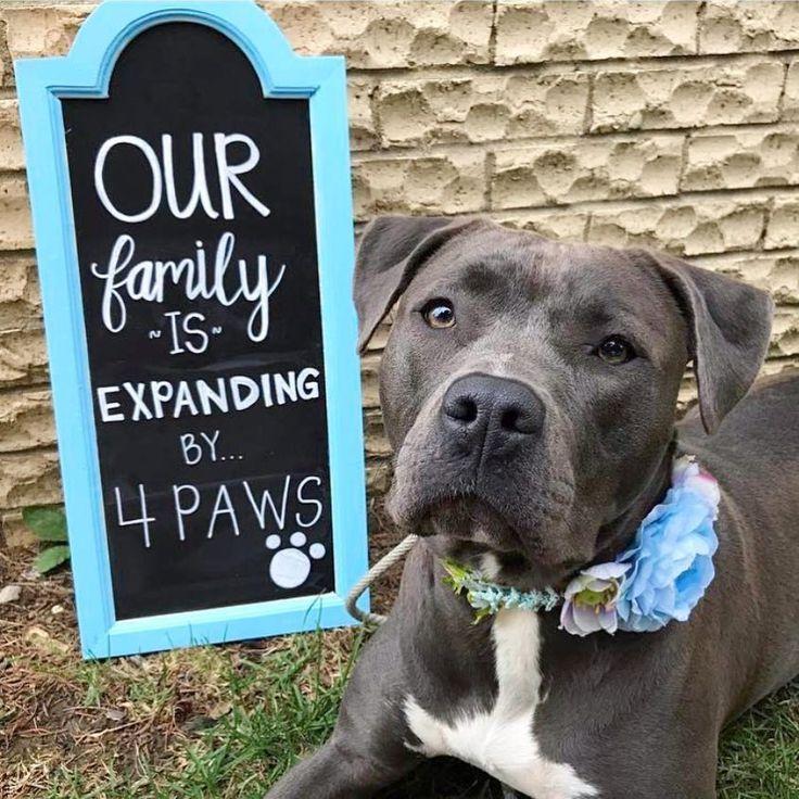 12 cute dog adoption announcement ideas adoption