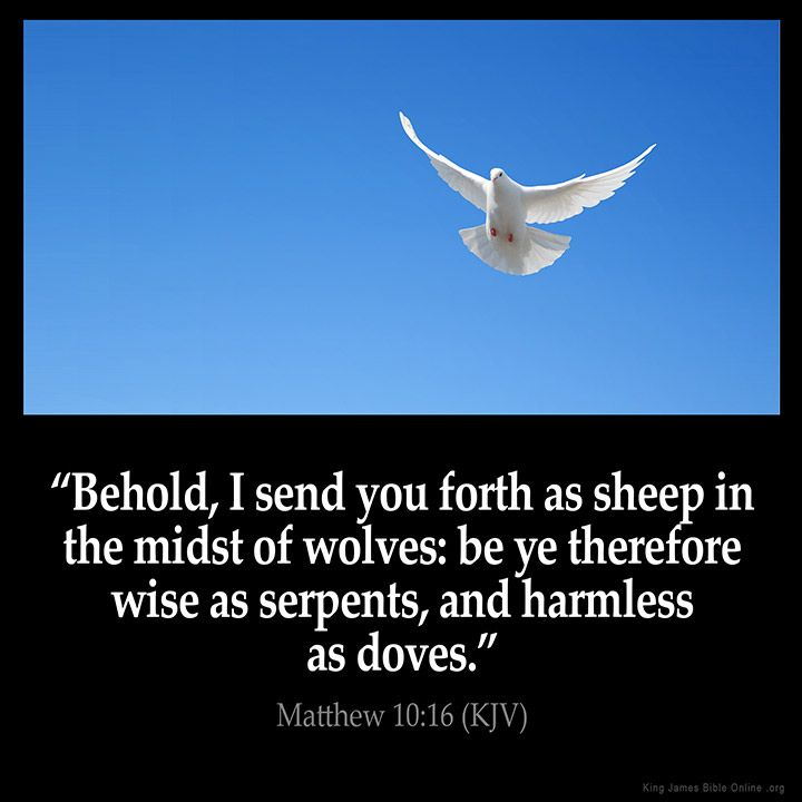 "Matthew 10:16 ""Behold, I send you forth as sheep in the midst of wolves: be ye therefore wise as serpents and harmless as doves."" Via http://ift.tt/1Pg1wY9"