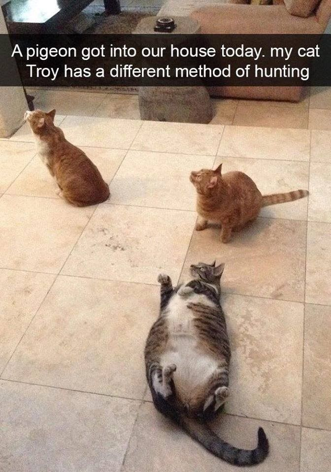 Best CATS Images On Pinterest Adorable Animals Adorable - Gps trackers reveal the crazy distance our cats walk when they go out at night