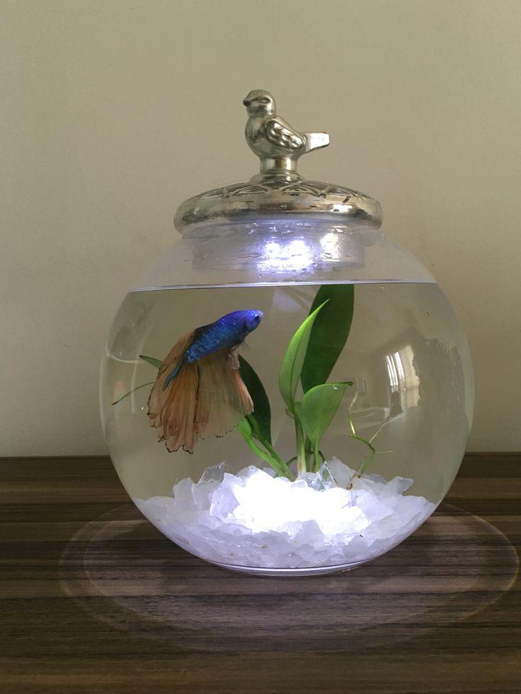 Aquario peixe beta com planta natural e luz de led ...