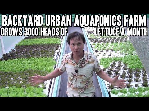 Backyard Urban Aquaponics Farm Grow 3000 Heads of Lettuce a Month  http://youtu.be/wpGwK81tOIs