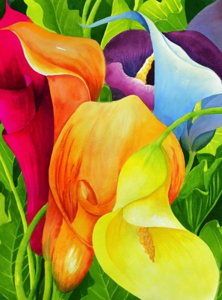 Calla Lily Rainbow - watercolor ©Janis Grau - http://fineartamerica.com/featured/calla-lily-rainbow-janis-grau.html