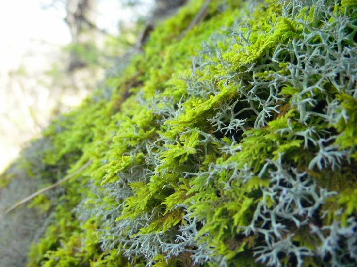 Moss, the woods, somewhere in the natural state.  http://earth66.com/macro/moss-woods-natural-state/