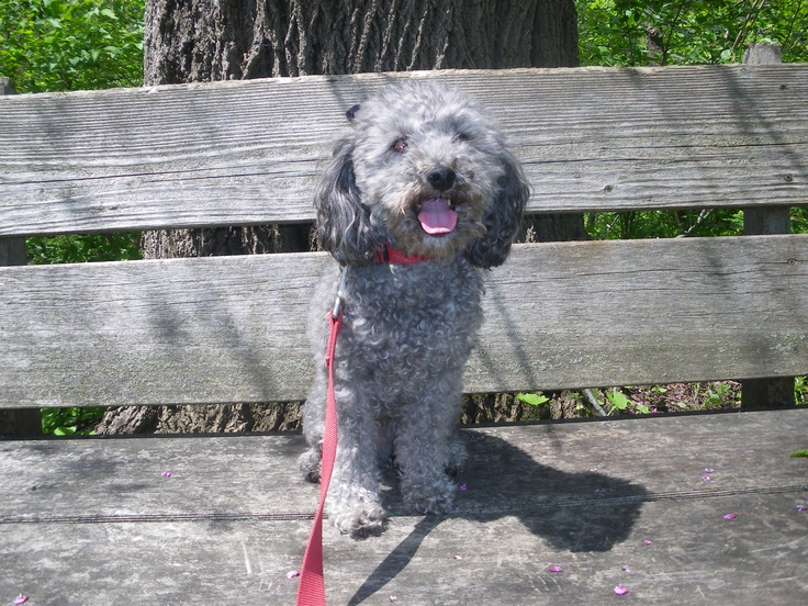 foster hanging out on a bench at the hamilton ontario RBG