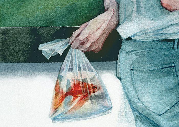 Goldfish | Dima Rebus