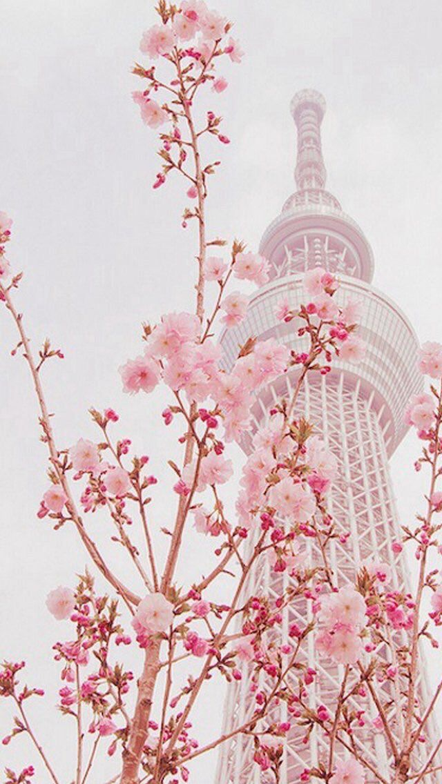 Japan Aesthetics On Twitter In 2020 Anime Cherry Blossom Wallpaper Aesthetic Wallpapers