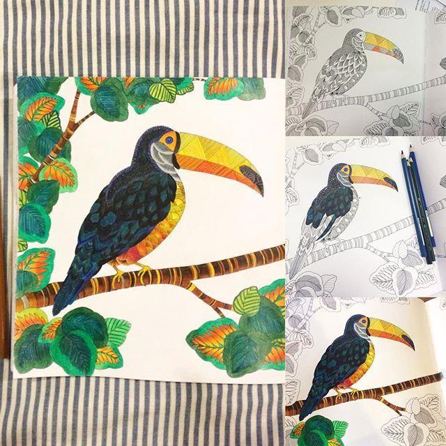 Animal Kingdom Johanna Basford Coloring Book Instagram Tropical Wonderland Pages Sheets