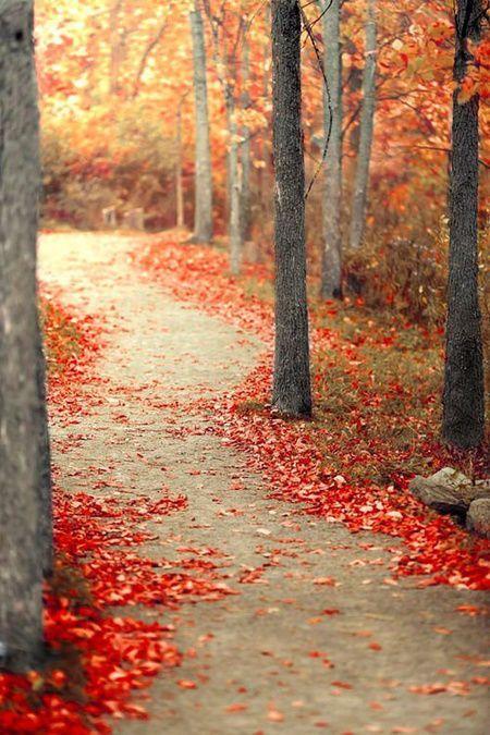 Autumn Path, Montreal, Canada photo via juliana