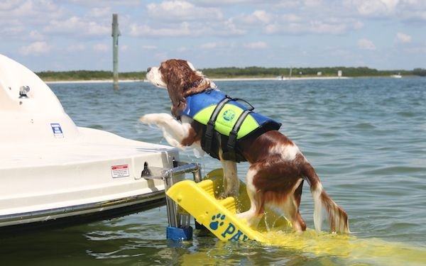 Dog Boat Ladder - Sturdy Ramp Style Boat Ladder for Dogs