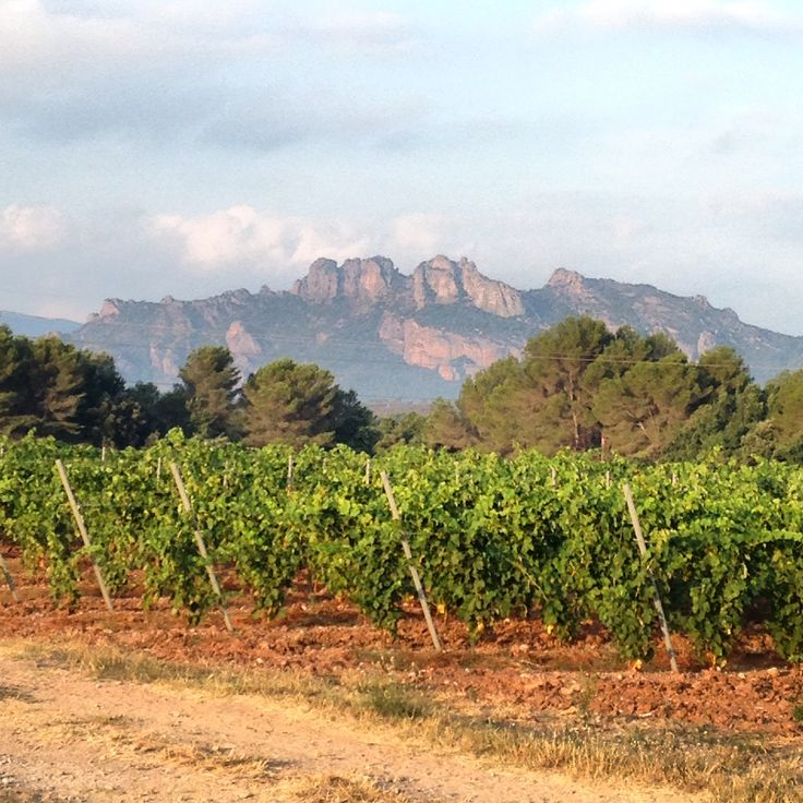 View of vinefields and Les Rocher