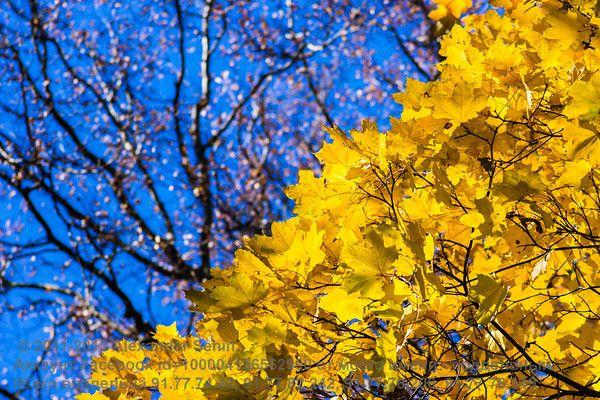 Alchemy Of Nature - Golden Streams / Я отсутствую в русскоязычных социальных сетях. Это фото опубликовано на сайте http://stphoto.smugmug.co...