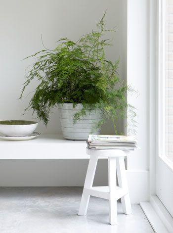 Verbind binnen met buiten door veel planten in de ruimte te zetten die grenst aan de tuin.
