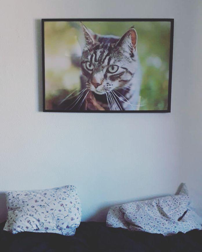 Jeg er hunde-menneske det er vist ingen hemmelighed. Men af og til kan katte også være ret søde. Her er katten Simba fotograferet i sit naturlige element og fremkaldt i en 70x100 storformat.  Tak til Line for billedet :)