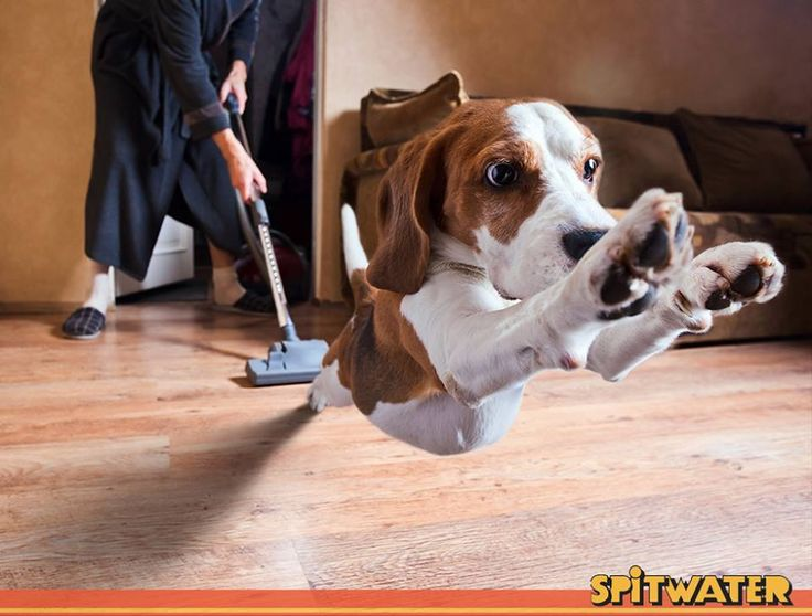 Are your pets also frightened of the vacuum cleaner?  #Spitwater #PressureCleaning #SpitwaterAustralia #Cleaning