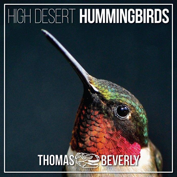 High Desert Hummingbirds Sound Effects library: http://www.asoundeffect.com/sound-library/high-desert-hummingbirds/