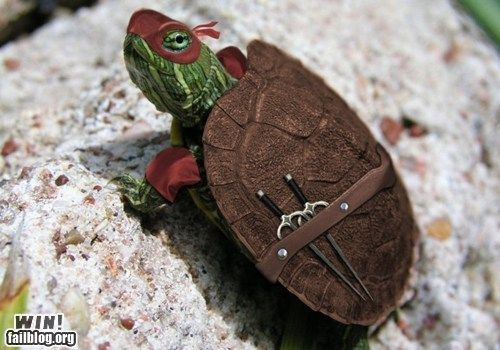 Donatello!: Real Life, Ninjas Turtles, Awesome, Tmnt, Teenage Mutant Ninjas, Ninjaturtl, Raphael, Funny Stuff, Animal