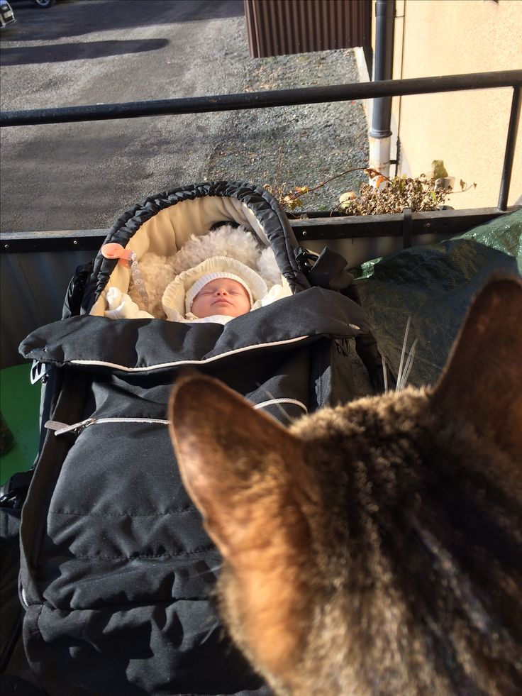 Cat looking over baby