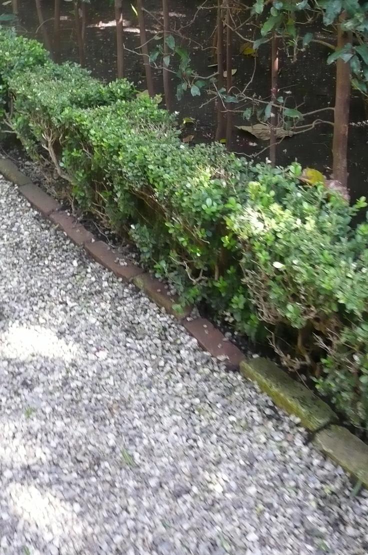 Brick/gravel path