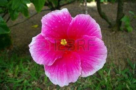 Pavimento in via giardino tropicale con fioriere