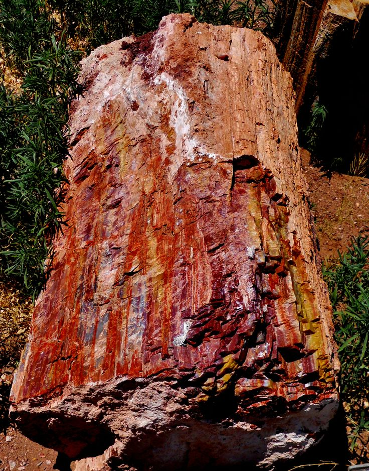 Petrified Wood From The Springerville Az Area Jasper