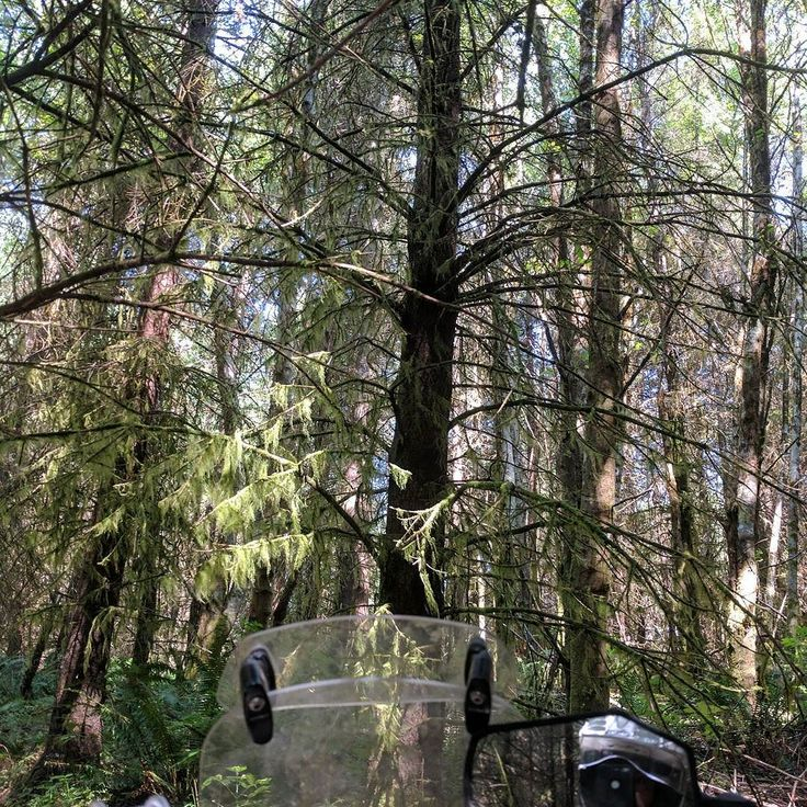 Love days in the woods with the moss and the trees... #womenadvriders #daretoexplore #moss