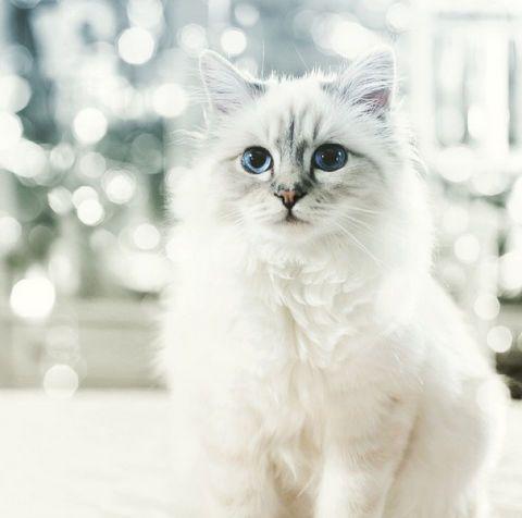 8 agosto The World Cat Day Oggi è la festa dedicata ai nostri pelosi e noi vogliamo festeggiarla insieme a voi!