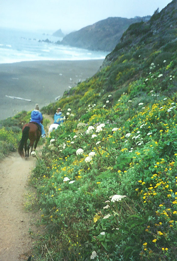 17 best images about beaches in northern california on for Best beach in northern california