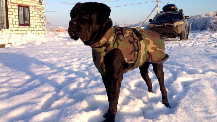 Одежда для собак! Дешевая одежда для собак!