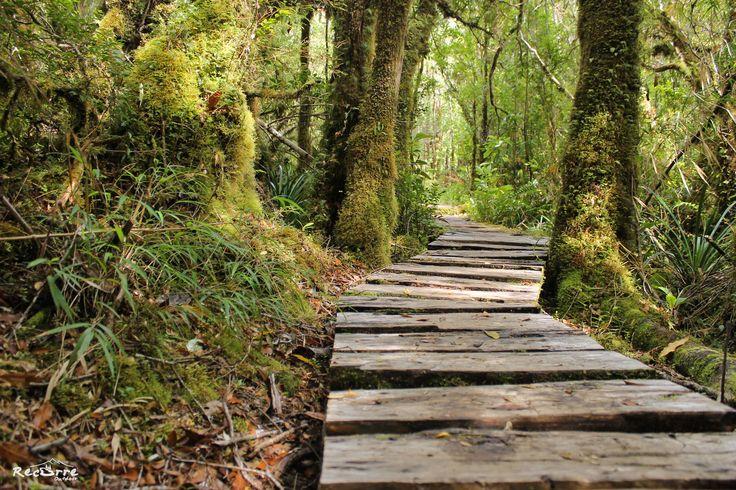 Secretos de la carretera  Carretera Austral, Chile #carreteraaustral #camino #bosque #paseo