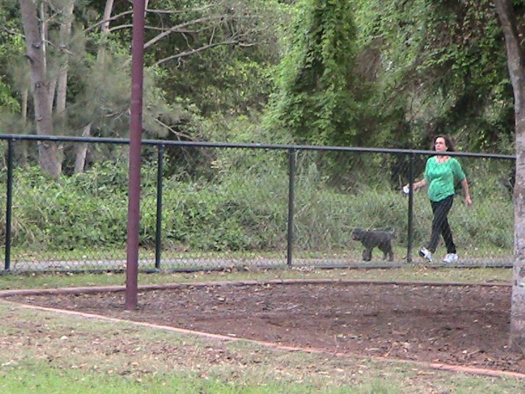 Dorrington park - dog walker