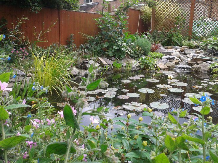 Best 25 waterside matures ideas on pinterest bog garden for Pond reeds for sale