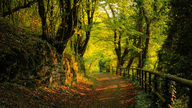 Top Forest - Nature - Foliage - Trees 02 http://www.wallpapersu.com/the-best-wallpapers-forest-nature-foliage-trees-sky/