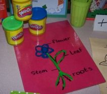Draw the parts of a plant on colored paper and laminate for durability. Let children roll playdoh to make the parts of a flower.