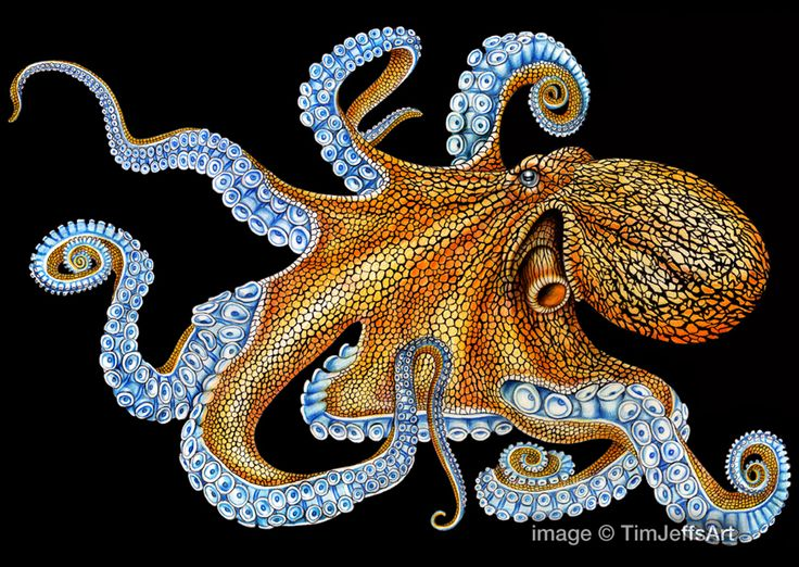 Here's my finished Octopus Colored Pencil Drawing. Prints, posters and cards can be purchased my shop at https://www.etsy.com/listing/216768796