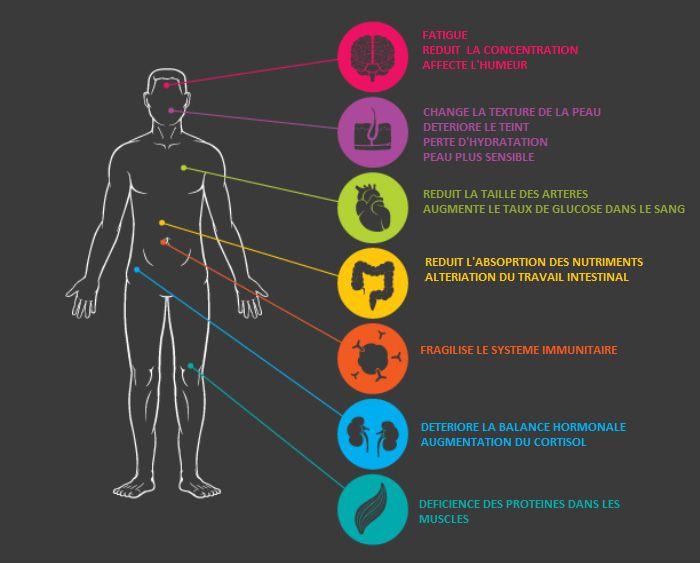Comment évacuer le stress stocké dans notre corps -  Passez-vous beaucoup trop de temps assis devant un ordinateur, derrière un comptoir, dans une voiture ou au bureau? Si votre réponse est oui, alors vos hanches peuvent être affectées, ce qui peut vous causer du stress. Le muscle Psoas, est un long muscle situé sur le côté de la région lombaire de la colonne vertébrale et le bord du bassin. Il est également connu sous le nom de « muscle de l'âme »...