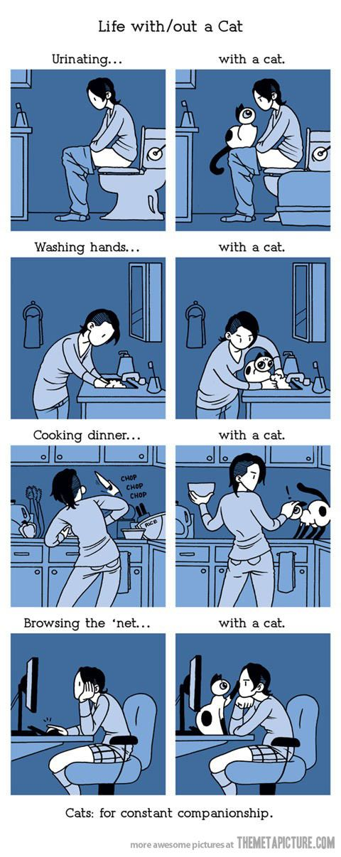 Life with a catso true. but life without my Squibby would just be too boring