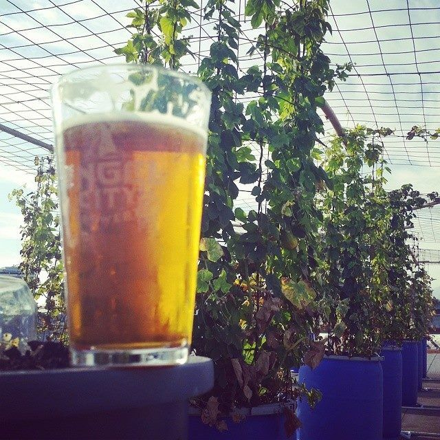 Happy National IPA Day Y'all!! Celebrate the little bud that brings us so much hoppyness!  Photo Cred: @angelcityemily
