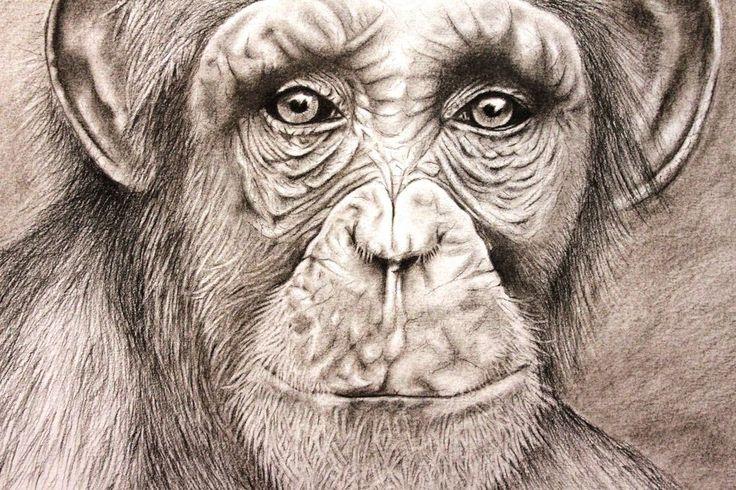 Charcoal A3 Chimp 280715