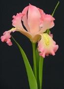 Sunisa's Clay Flowers