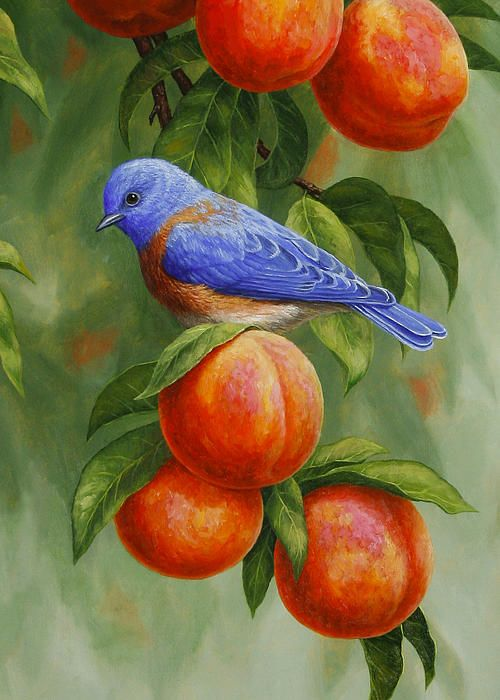 Western Bluebird in a peach tree oil painting greeting cards Buy Now #buyart…