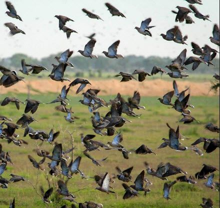 Follow these 10 dove hunting tips and improve your dove season.