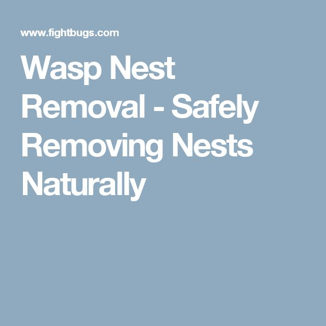 Die besten 25+ Wasp nest removal Ideen auf Pinterest ...